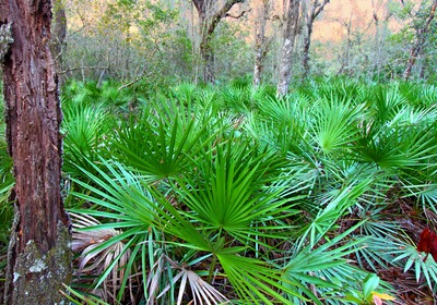 Explore the Fascinating World of Native Florida Plants