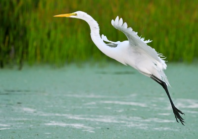Top 4 Places to See Wildlife in Central Florida
