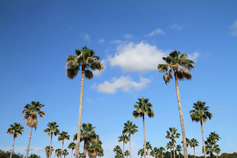 Discover the World of Florida Palm Trees