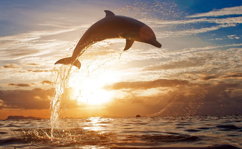 It's Flipper! Most Common Dolphins You'll Spot in Florida